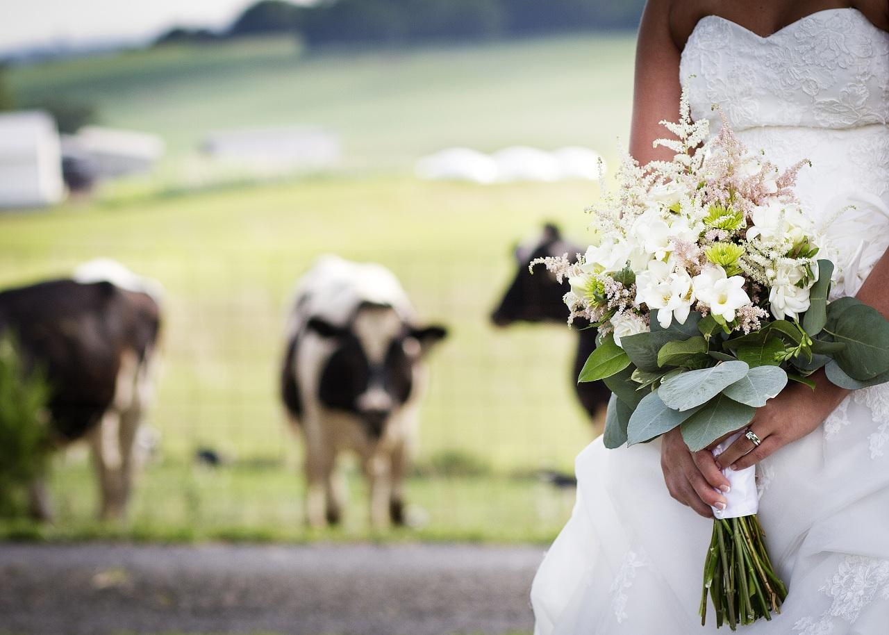 Wedding-Celebration-on-Sunny-Slope-Farm-14