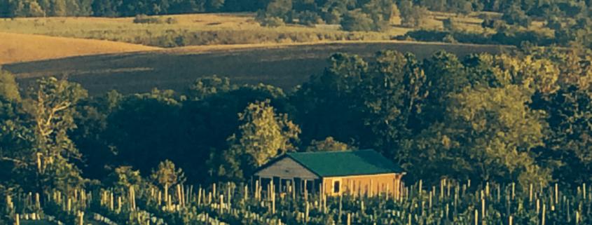 Third Hill Winery at DeMello Vineyards